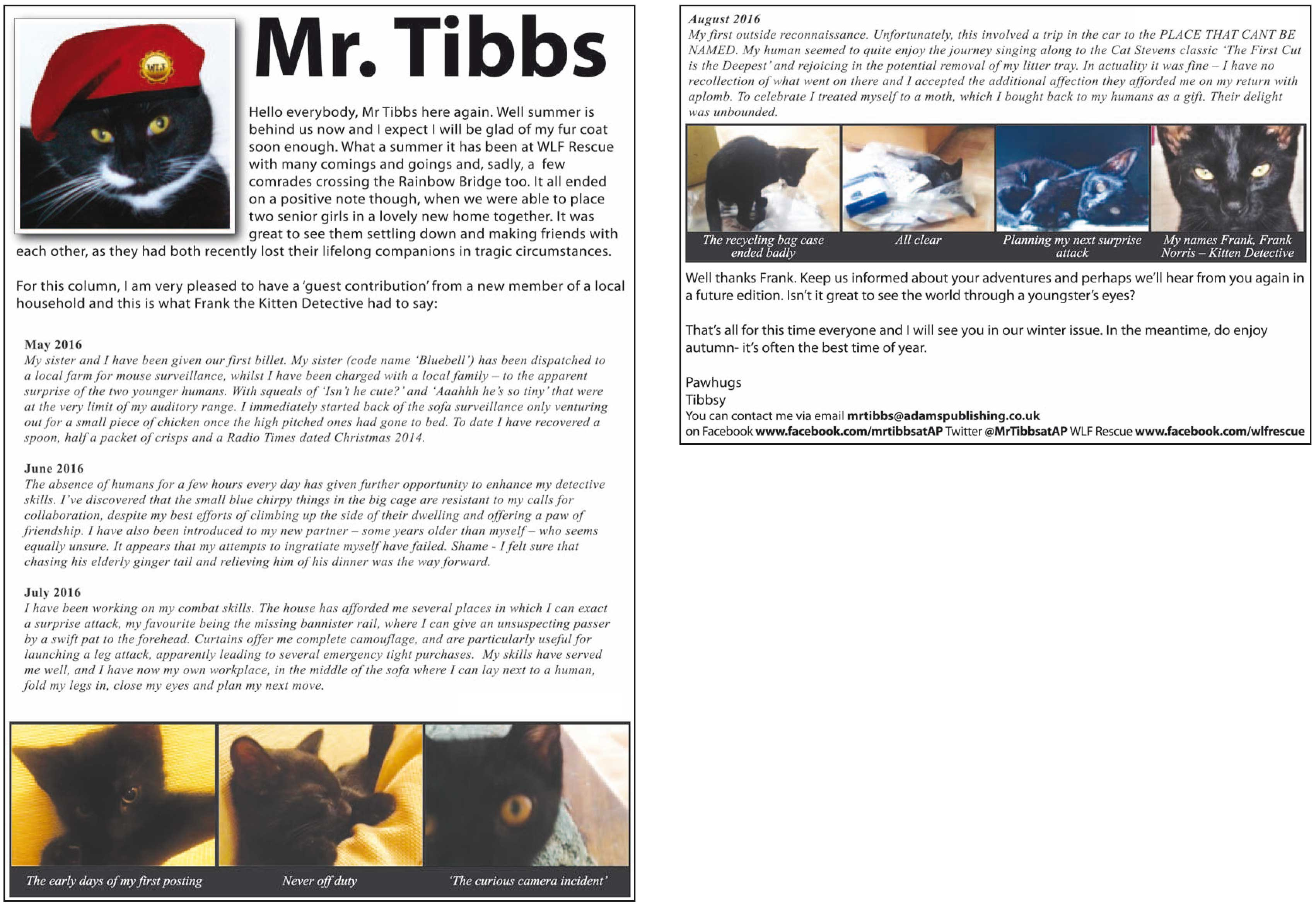 mr-tibbs-autumn